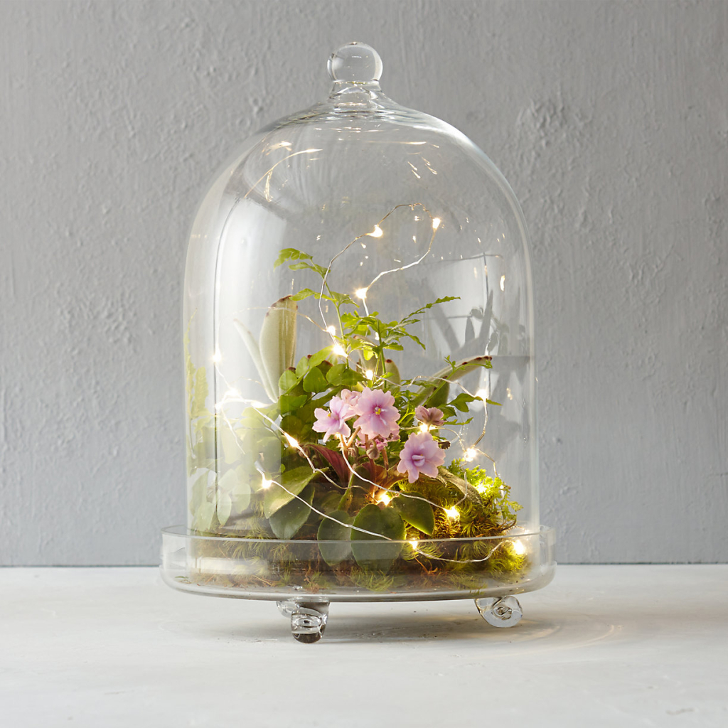 Light-Cloche-Terrarium-shopterrain.com