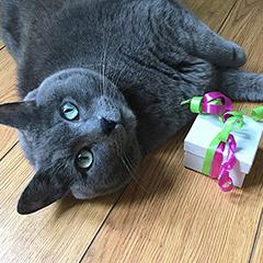 libbey-cat-giftbox-hsus
